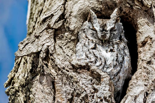 Invisible, thanks to supreme camouflage.
